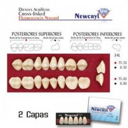 Molares Superiores Acrilicos 2 capas Newcryl