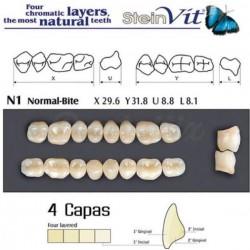 Molares Superiores Steinvit 4 Capas